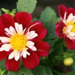 Menu kwiatowe – smaczne dla Twojegomiasta!