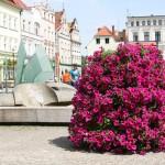 Pielęgnacja roślin wwieżach kwiatowych