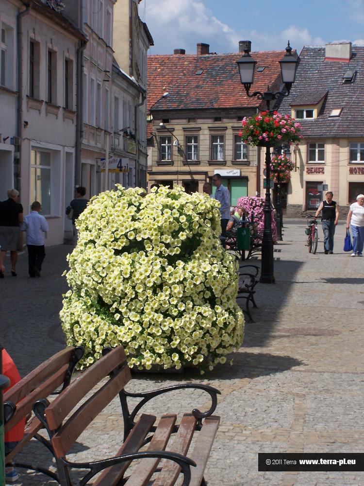Kwiaty w mieście Lubsko