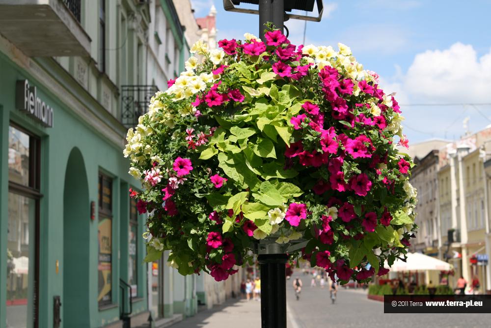 kwiaty w mieście Łódź1