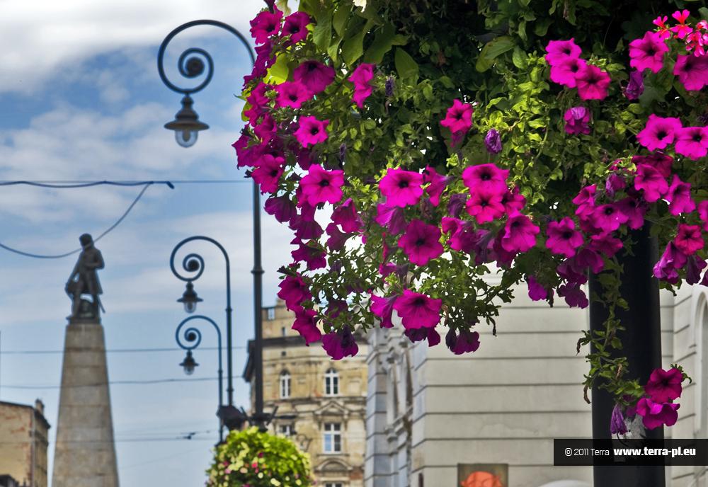 kwiaty w mieście -Łódź6
