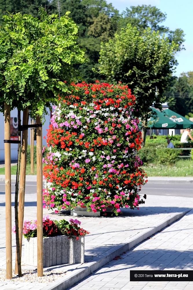 Barwne kwiaty, czyli kwietniki miejskie