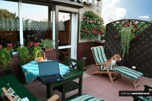 Kompozycje kwiatowe na balkon i taras