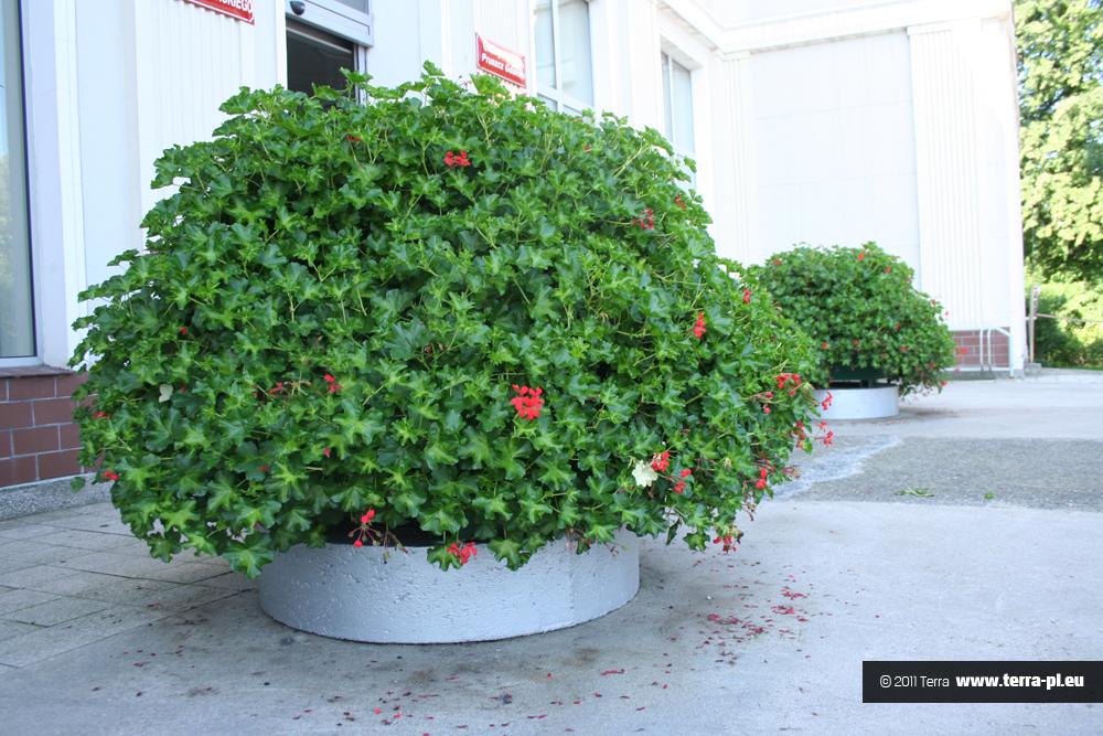 targi ogrodnicze kwiecień