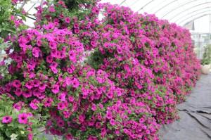 Kwiaty w Sędziszowie