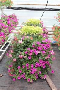 Konstrukcje kwiatowe w Trzciance Lubuskiej