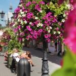 Zachwycający efekt kwiatowy wŚwiebodzinie