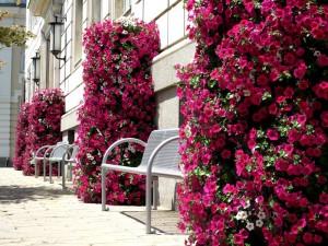 Sofia inspiruje wieżami kwiatowymi
