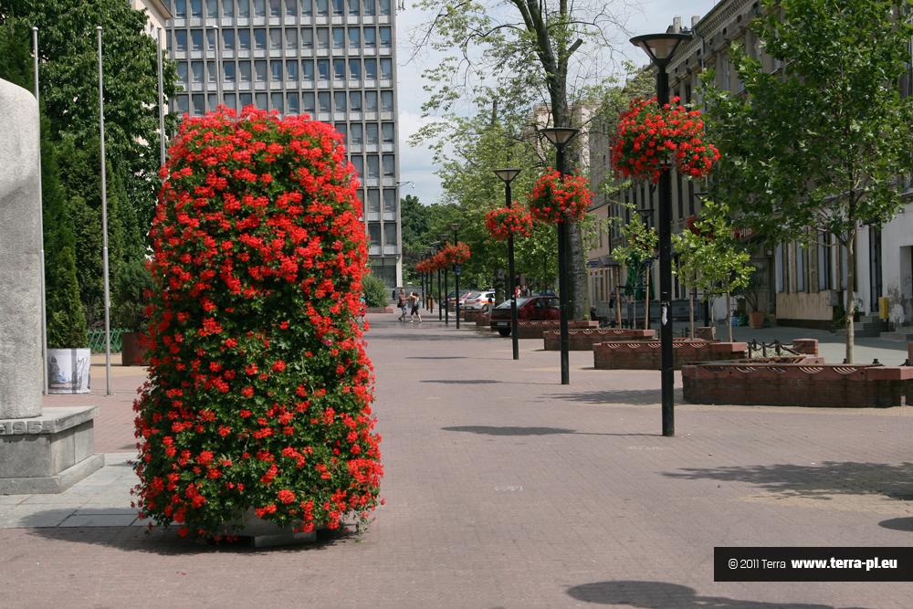 Pielęgnacja wież kwiatowych