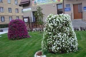 Kwiaty zmieniają miasto