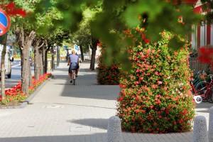 Wieże kwiatowe – jak odnieść sukces w ich pielęgnacji
