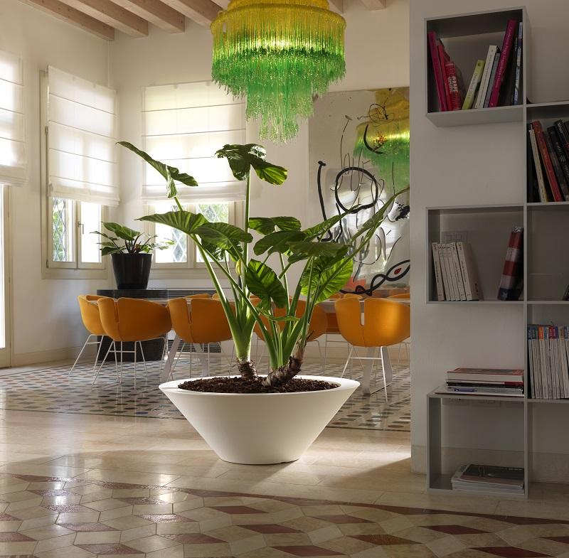 rośliny domowe w donicach