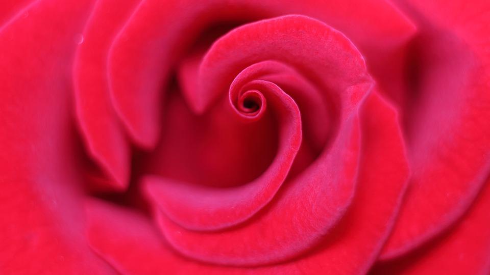 Kochasz? Powiedz to… Kwiatem!