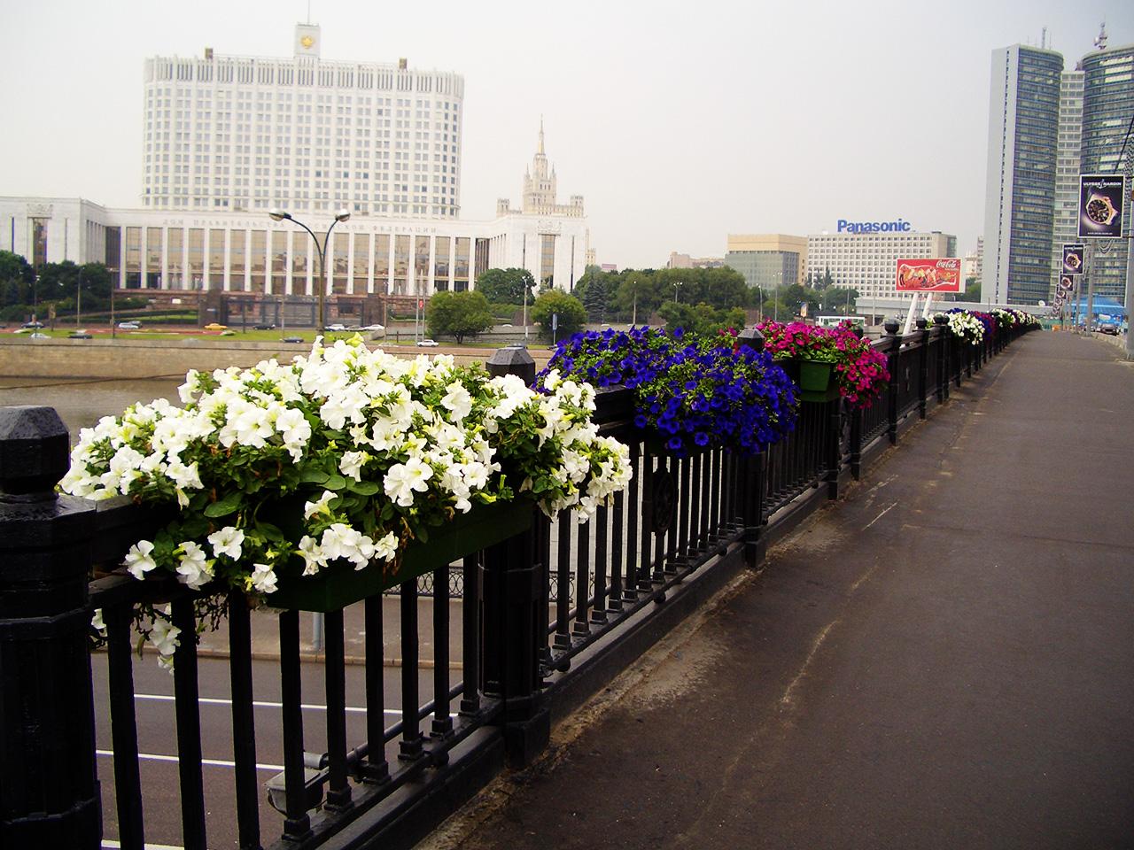 Rośliny do skrzynek kwiatowych