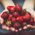 Jak uprawiać truskawki?