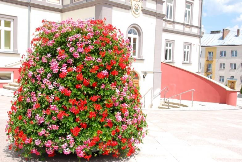 kwietniki miejskie terra (7)