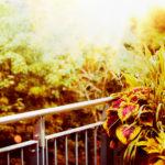 Jak ukwiecić balkon jesienią?