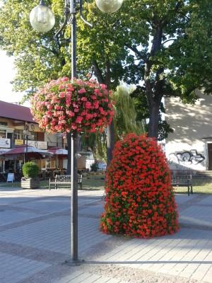 kwietniki miejskie Kwidzyn (1)