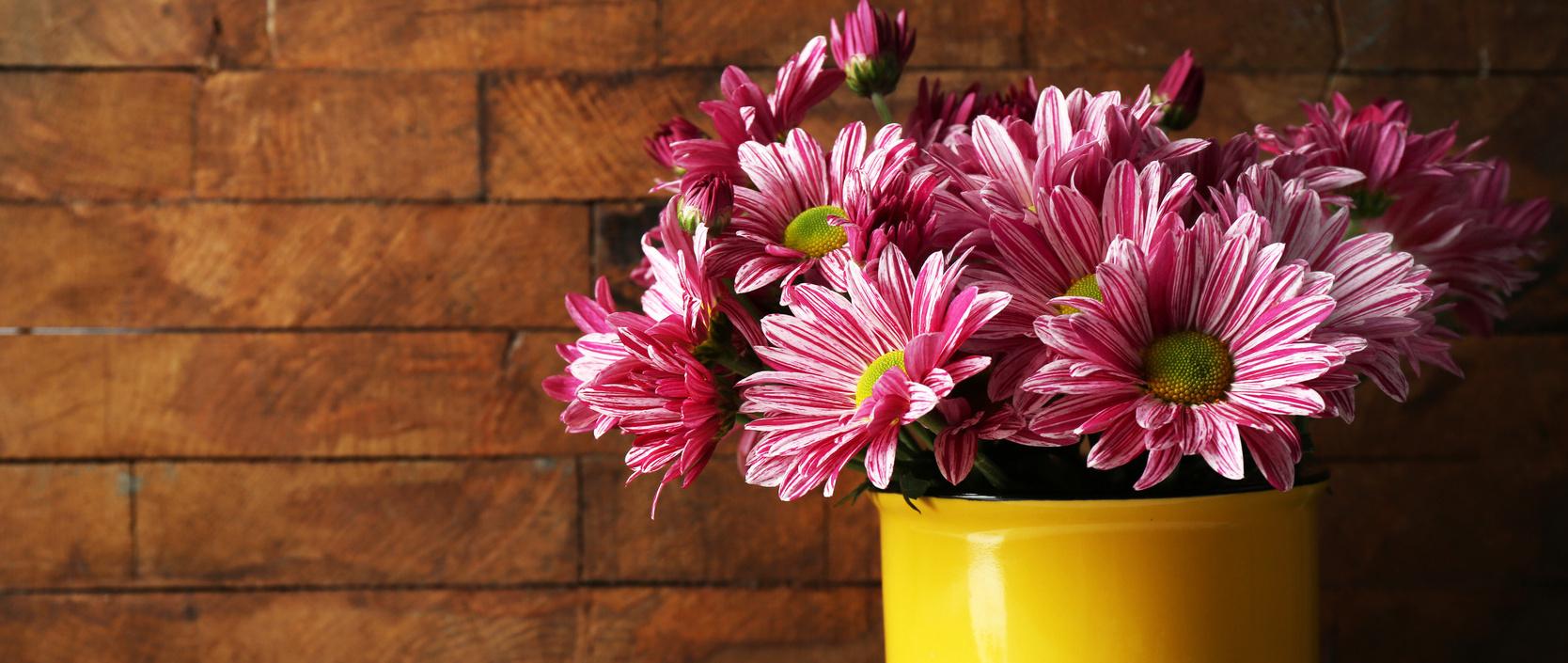 Radosna chryzantema – jesień w kolorach!