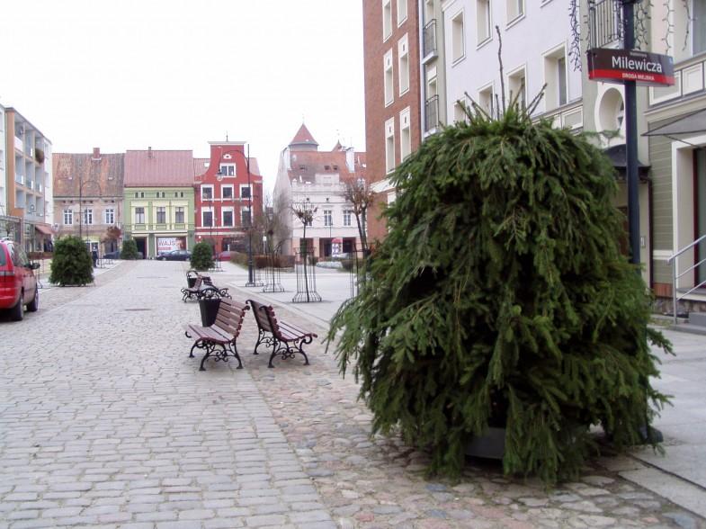 kwietniki miejskie terra zima