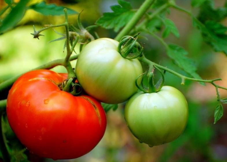 warzywa do warzywnika (1)