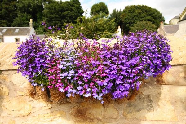kwiaty do skrzynek