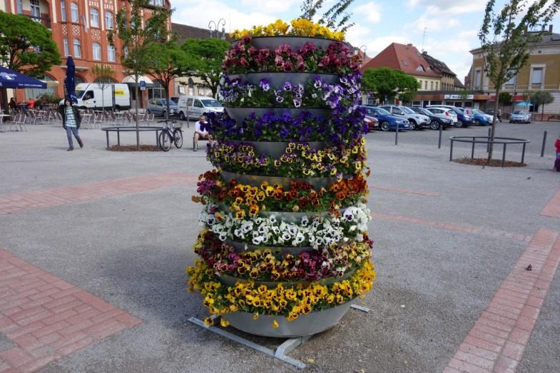 kwietniki miejskie terra Brandenburg an der Havel (23)