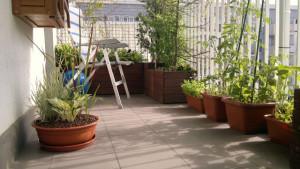 Bylinowa donica na balkonie - funkia i trawy