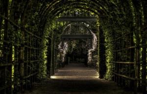 Aby Twój ogród leczył ciało i duszę – cz. 1 Co na to nauka?