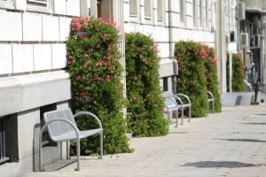 Pomysł na ukwiecenie: dekoracja ścian i ogrodzeń