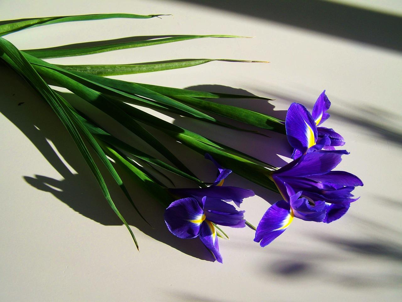 rośliny cebulowe (3)