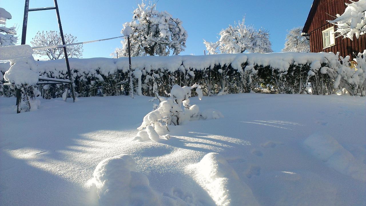 ogród zimą (3)