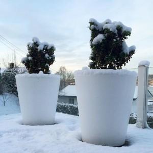 Czas na rośliny zimozielone