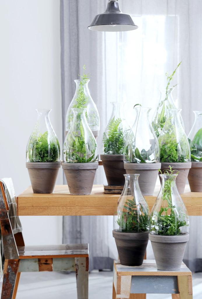 Szklane ogródki nabite w butelkę (5)