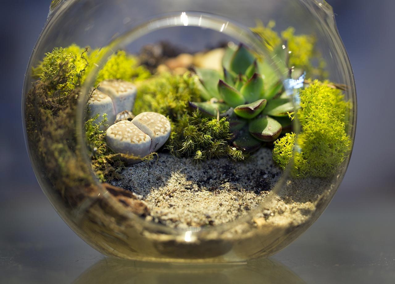 Szklane ogródki nabite w butelkę 8