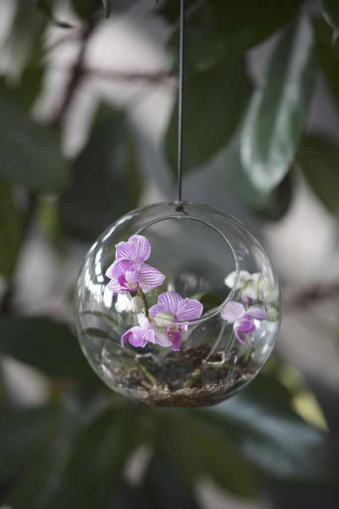 Szklane ogródki nabite wbutelkę (9)