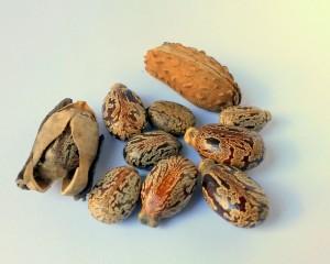 przygotowanie nasion do wysiewu (3)