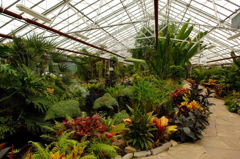 Beautiful exotic plants in agreenhouse in Hamilton Ontario.