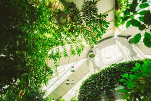 Ogród zimowy, czyli zielony salon
