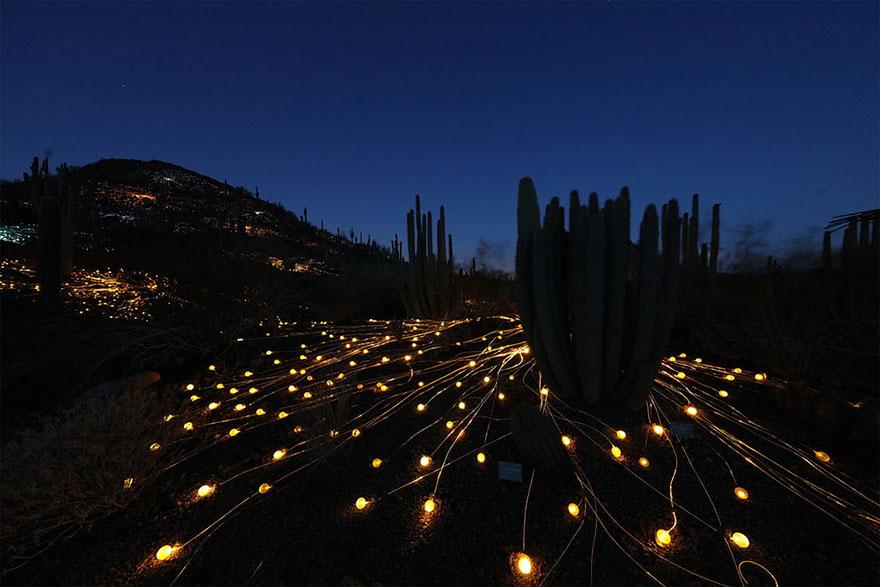 50,000 świateł w cieniu tajemnicy