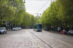 Drzewa liściaste, by lepiej żyć w mieście