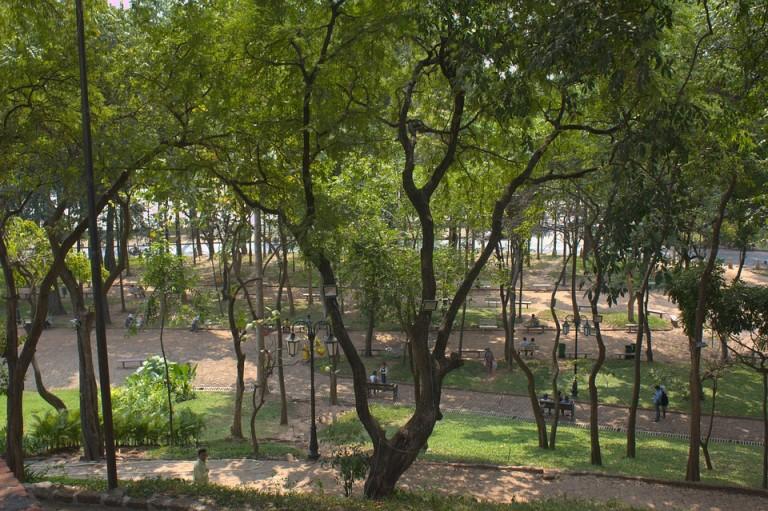 drzewa w mieście (2)