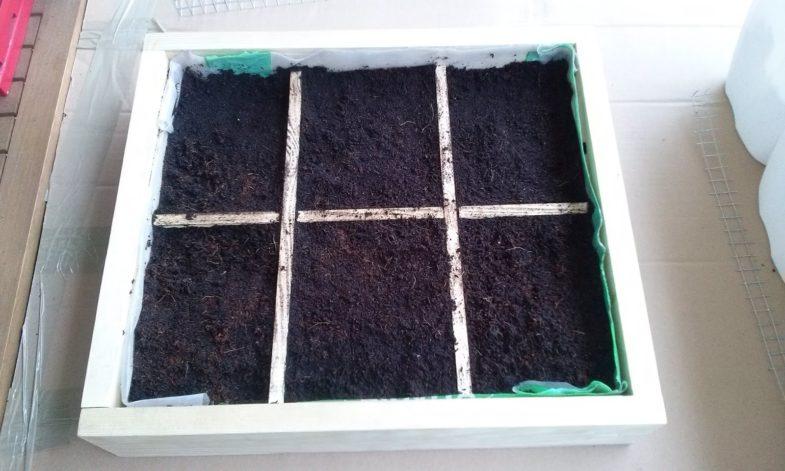 5. Skrzynię wykładamy lekkim podłożem zwłókna kokosowego, ziemi urodzajnej ipiasku.