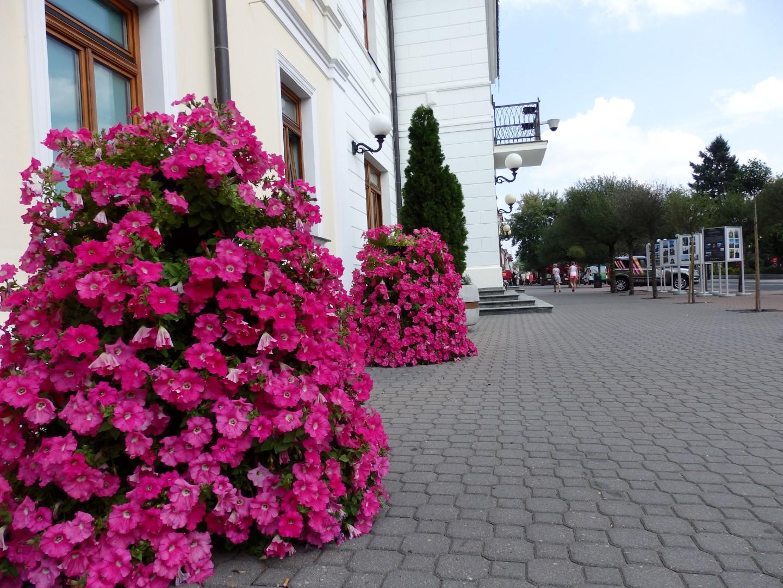 terra flower power biała podlaska 1