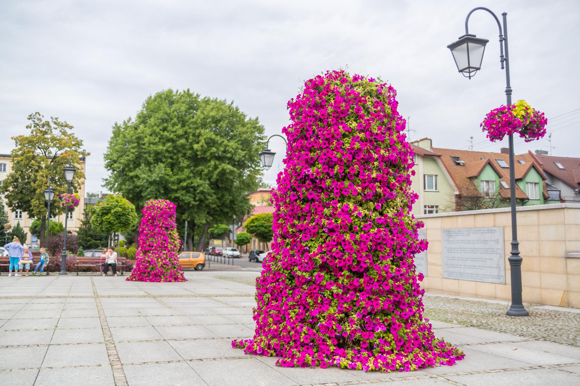 wieze-kwiatowe-terra-1