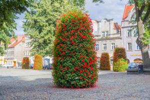 wieze-kwiatowe-terra