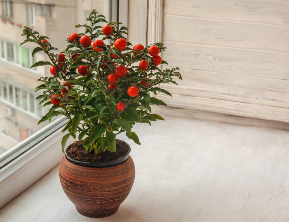 Najpiekniejsze Kwiaty Bozego Narodzenia Inspirowani Natura
