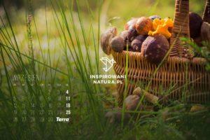 kalendarz wrzesien 2016 inspirowani natura