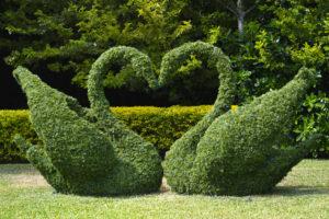 """Jak dbać o tzw. """"topiary""""?"""
