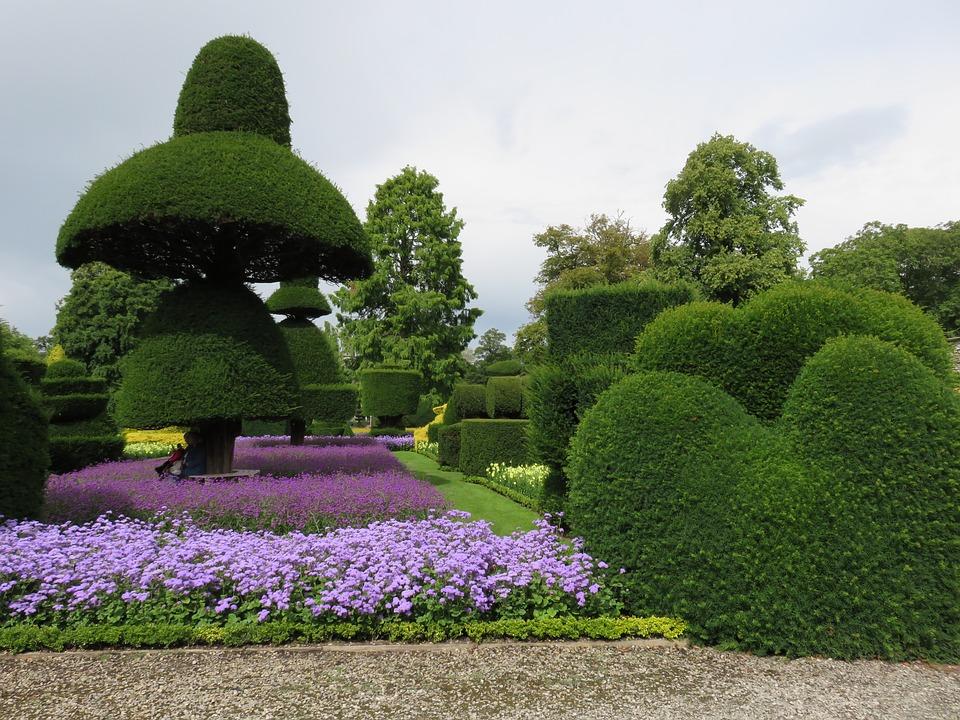 jak dbać o topiary (3)